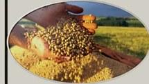 Desenvolvimento de métodos para quantificação de substâncias húmicas em fertilizantes orgânicos: aplicação em composto de dejetos suínos