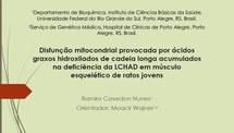 Disfunção mitocondrial provocada por ácidos graxos hidroxilados de cadeia longa acumulados nas deficiência da LCHAD em músculo esquelético de ratos jovens