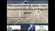 Meio condicionado de células-tronco mesenquimais modula a autofagia em gliomas
