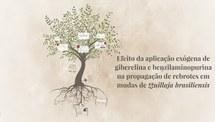 Efeito da aplicação exógena de giberelina e benzilaminopurina na propagação de rebrotes em mudas de Quillaja brasiliensis