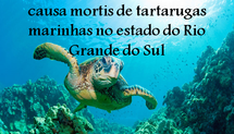 Estudo retrospectivo de causa mortis de tartarugas marinhas no estado do Rio Grande do Sul