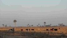 Estimativa de emissão de metano por ruminantes em ambientes pastoris