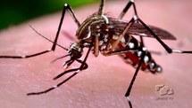 Ações contra o mosquito Aedes aegypti